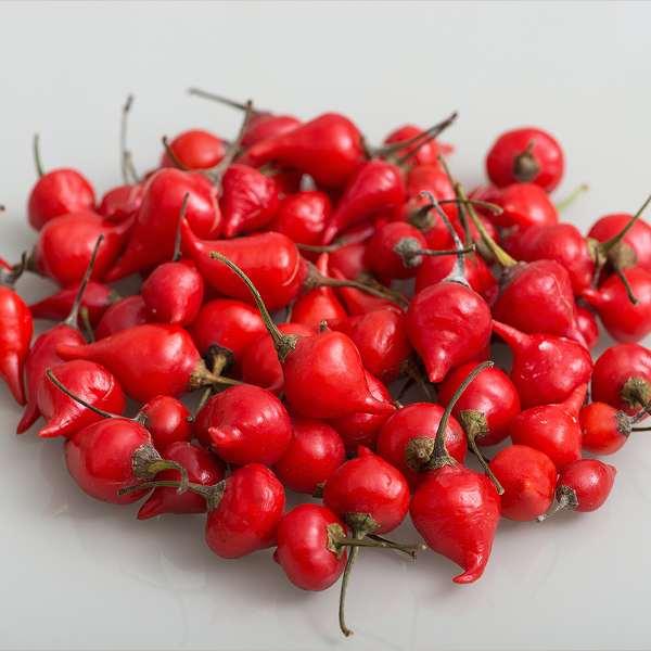 Biquinho Red