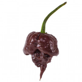 Carolina Reaper Chocolate