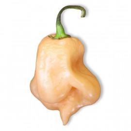 Trinidad Scorpion Peach